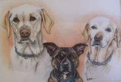 Gill's Dogs
