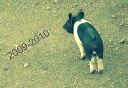 Aug 30th pig