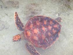 Hisbiscus turtle sanctuary
