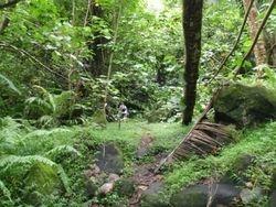 Fatu Hiva jungle hike to waterfall