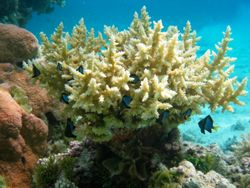 Nice coral picture