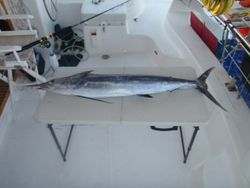 5 1/2 ft 80 lbs Spearfish