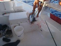 Spearfish landing