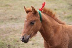 RP X FDL JD foal