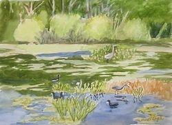 Ollie's Pond III
