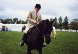 steve riding ross black bess
