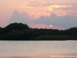 Sunset on Paurotis Pond