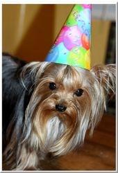SNUFF.. HIS 2ND BIRTHDAY!