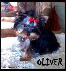 OLIVER LIVES IN OKLAHOMA