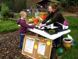 Plant a Sunflower activity for Britain in Blooms 50th Anniversary