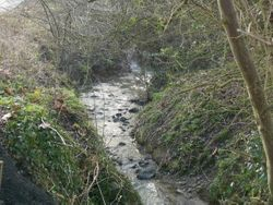 The Brook before the clean up