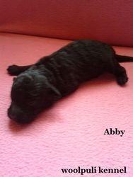 Abby 24.05.2013
