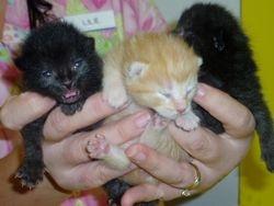 New Borns!