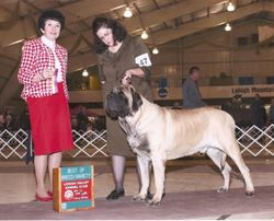 Lehigh Valley Kennel Club BOB