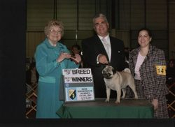 Best of Breed - 1st time out from puppy class