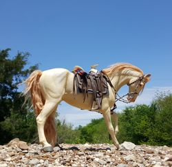 Mexican saddle forPancho's Loco