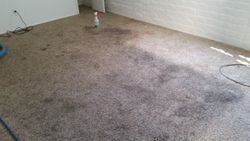Heavily soiled carpet