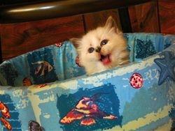 past kitten