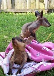 Roscoe and Janai