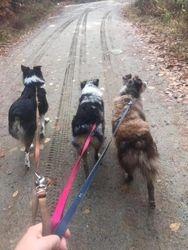 a walk to the trail head