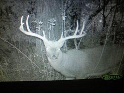Nice Buck Caught On Trail Cam