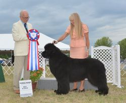 Best In Show July 31 2016