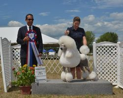 Best In Show Aug 1 2016