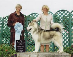 August 04, 2008 - Best Puppy in Show