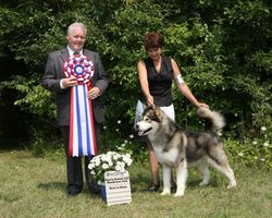 Monday, August 01 - Best In Show