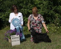 Saturday, July 30 - Best Puppy In Show