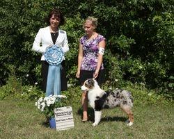 Sunday, July 31 - Best Puppy In Show
