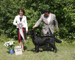 Sunday, July 31 - Reserve Best In Show