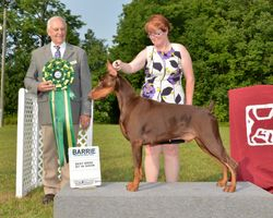 Saturday, August 2 - Best Bred By Exhibitor In Show