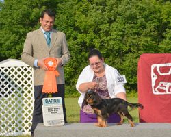 Sunday, August 3 - Best Baby Puppy in Show