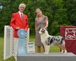 Monday, August 4 - Best Puppy in Show