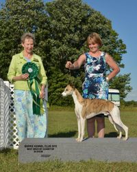 Best Bred By Exhibitor In Show Aug 1