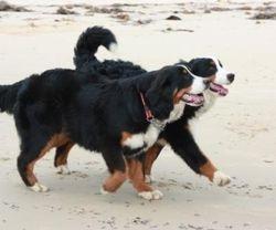 Churning up the sand