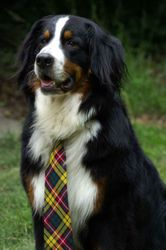 Scotch in formal wear
