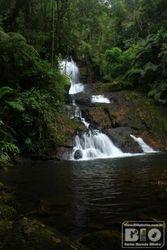 Cachoeira Ouro Fino Mata Atlantica PZ cod.0921