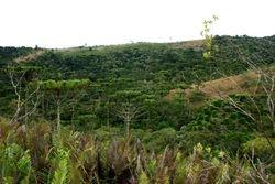 Floresta Ombrofila Mista PECJ cod.5827