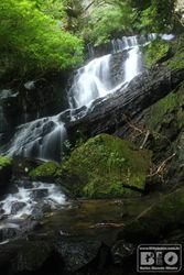 Cachoeira PEI cod.2984