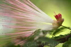 Flower cod.9017