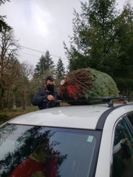 Bailed and loaded atop the car