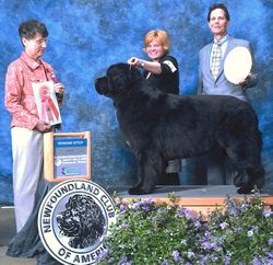 Hawk x Jelly Daughter - VN Ch Bright Star Macy Mae of Blackwatch, CD, DD, WRDX