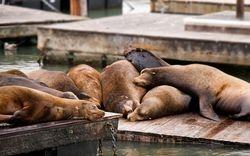 San Francisco Seals