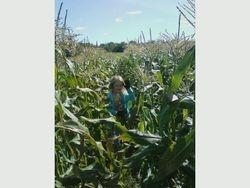 sweet corn fun
