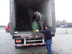 Unloading The Trees