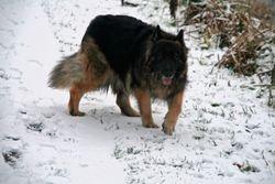 Bessie in the Snow