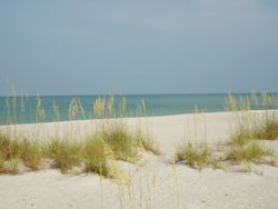 Sea oats and sand!