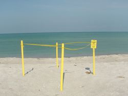 Seaturtle nest marke for protection!